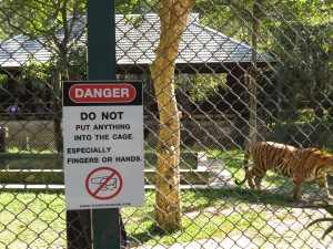 "Tigers don't see fingers or hands, they just see ""toys"""
