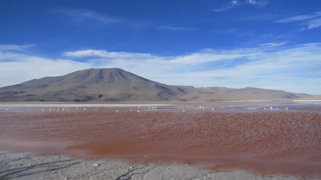 Lagauna Colorada, one of the many bizarre stops on the way to the Salt Flats.  The flamingo feed on the lake's micro algae living in the water, which gives the lake its red color.
